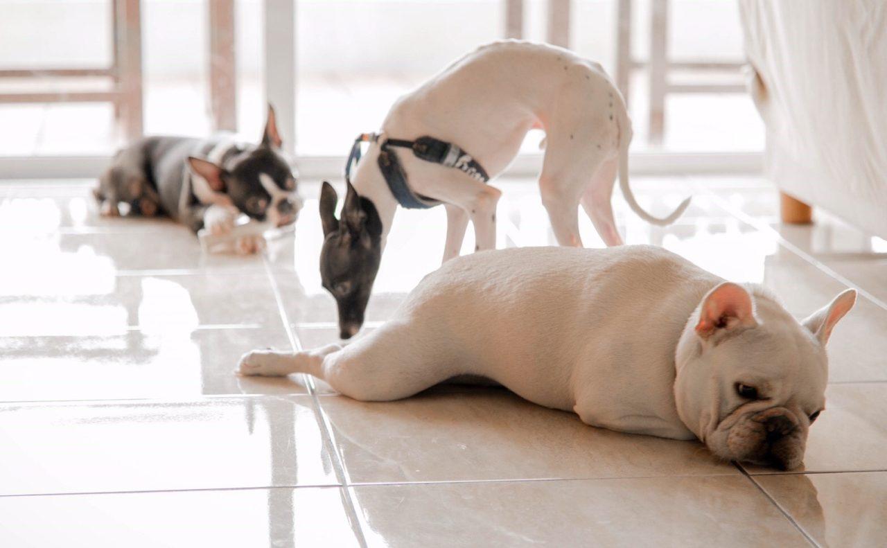 ペットと暮らす家